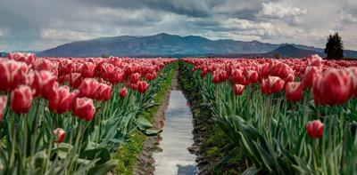 Giżyckie Stowarzyszenie Osób z chorobą Parkinsona ich Rodzin i Przyjaciół Tulipany