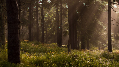 ...dbanie o wysoką jakość środowiska to działanie na rzecz wszystkich istot...