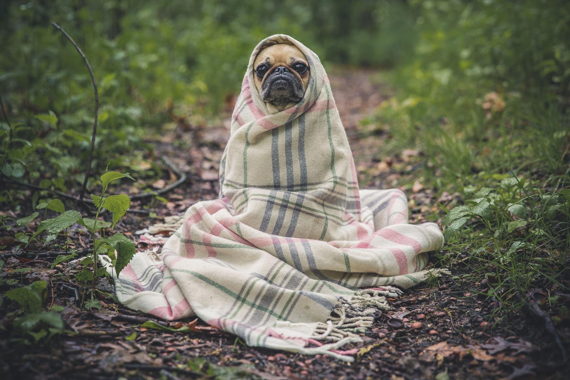 Nie kupuj psa w worku! Psia-Mac.pl