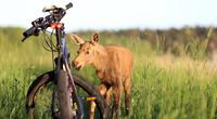 """Raj Team Rajgród"" - rowerowa inicjatywa"