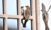 Dbają by szklane powierzchnie nie były pułapkami dla ptaków