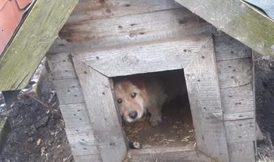 Chronią zwierzęta w swojej gminie i uczą mieszkańców dbać o nie