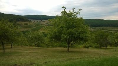 Lokalna Strategia Rozwoju w Borach Dolnośląskich