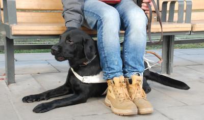 Szkolenie i przydzielanie psów przewodników dla osób niewidomych