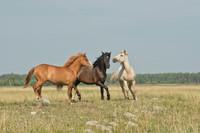 Fundacja Nasza Szkapa - Zwracają godność zwierzętom