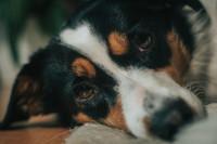 Pod przewodnictwem najlepszego przyjaciela - Fundacja Pies Przewodnik
