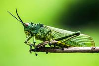 Miliony gatunków owadów, których za sto lat już może nie być na Ziemi