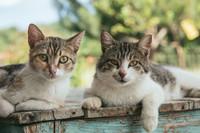 Kocie wołanie o pomoc - Fundacja KOTY SOS